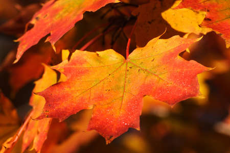 red leaf is a sign of autumn