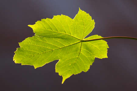 green leaf is a sign of spring Stock Photo - 16049698
