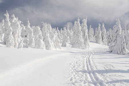 bosque con nieve: Paisaje de invierno con la ruta de esqu� de fondo