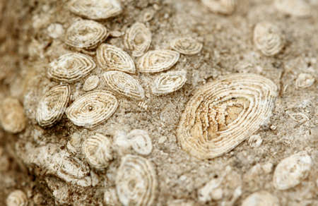 Ancient fossils in a limestone Stock Photo