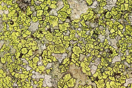 Lichen on the rock in Tatras Stock Photo