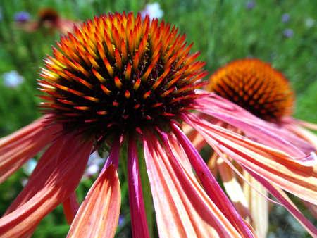 Flower 01 Stock Photo