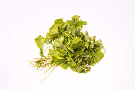 longevity medicine: Gotu kola isolated white background Stock Photo