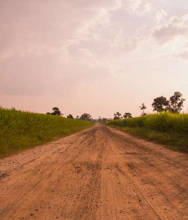 rural roads: Rural roads paddy rice tree