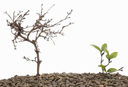 muerte: �rbol muerto y el crecimiento del �rbol del fondo aislado