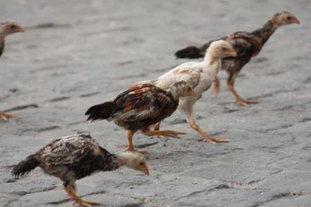 Bird 免版税图像