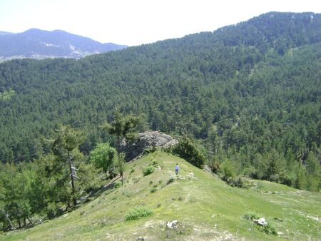 ponderosa pine: The rocky hill on the Taurus Mountsins