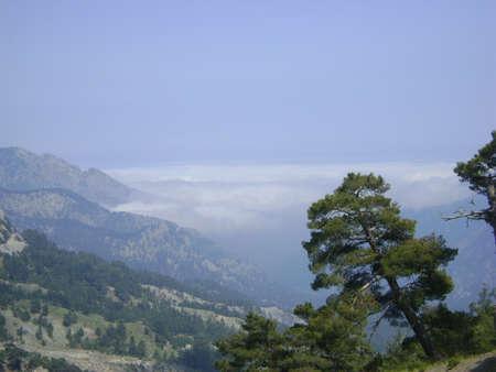 ponderosa pine: Goynuk Canyon, Kemer, Antalya