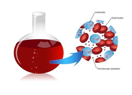 piastrine: Le cellule del sangue - globuli rossi, piastrine, leucociti Vettoriali