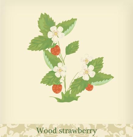 layout strawberry: Wood Strawberry. Beautiful vintage colors. Illustration