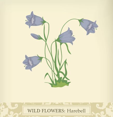 Harebell, Wild flower. Beautiful vintage colors Stock Vector - 9932740