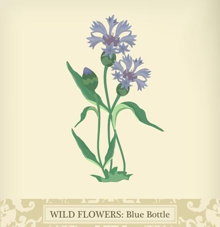 Bottiglia blu (Fiordaliso), Wild colori flower.Beautiful d'epoca