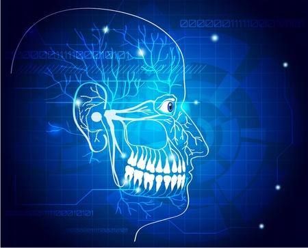 nervios: Antecedentes m�dicos abstracta, cabeza humana, dientes y los nervios. Vectores