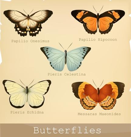 mariposas amarillas: Colección de Bellas mariposas. Ilustraciones detalladas. Vectores