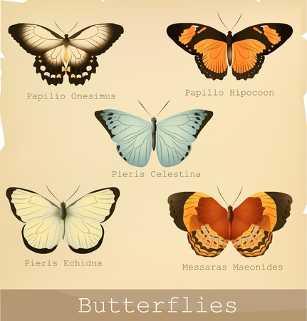 exotic butterflies: Collection of beautiful butterflies. Detailed illustrations.