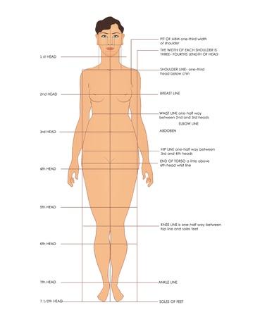 Sewing measurements. Shoulder line, breast line, waist line, etc. Stock Vector - 10367861