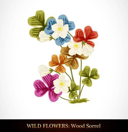 sorrel: Wood Sorrel, Wild flower.   Illustration