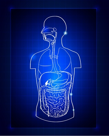 digestive system: Abstract gastrointestinal system