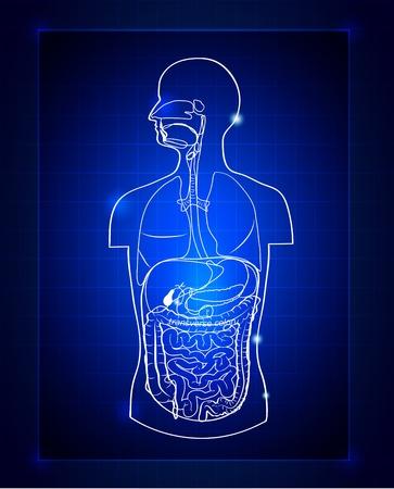 sistema digestivo humano: Resumen del sistema gastrointestinal