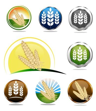 ječmen: Potraviny štítky kolekci pro výrobky celých zrn obilovin. Různé světlé barvy.