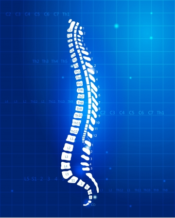 Позвоночник человека Анатомия