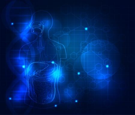 układ pokarmowy: Medical tle. Abstrakcyjny układ trawienny, piękne kolory niebieski. Ilustracja