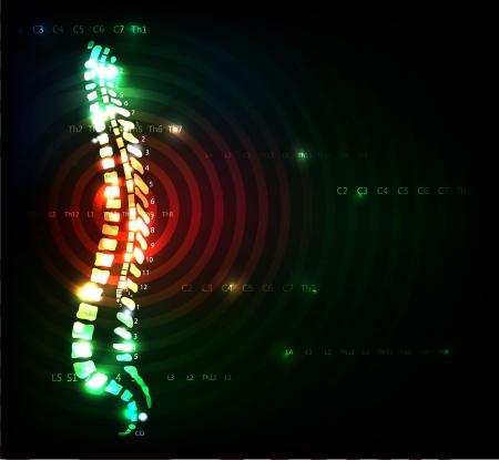 colonna vertebrale: Colorful colonna vertebrale Mal di schiena concetto Illustrazione con colonna vertebrale umana, anatomia con il colore rosso al centro della colonna vertebrale