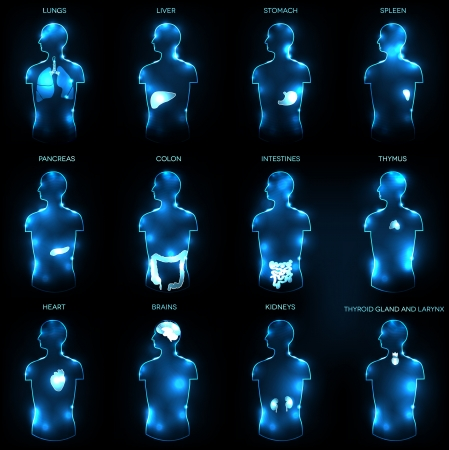 Menselijke anatomie begrip abstract medische achtergrond Verschillende menselijke organen lever, hart, nieren, longen, dikke darm, darm, maag, hersenen, enz. Vector Illustratie