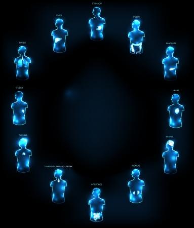 anatomia humana: Concepto Anatom�a humana abstracta m�dico wallpaper Varios �rganos del h�gado humano, el coraz�n, los ri�ones, los pulmones, el colon, el intestino, el est�mago, cerebro, etc El texto de su anuncio en la mitad si es necesario
