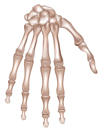 Le ossa della mano destra Dettagliata illustrazione medico isolato su uno sfondo bianco disegno realistico e accurato
