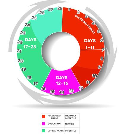 apparato riproduttore: Ciclo mestruale grafica. Avarage mestruale giorni del ciclo. Fase follicolare, ovulazione, fase luteale. Bleeding giorni.