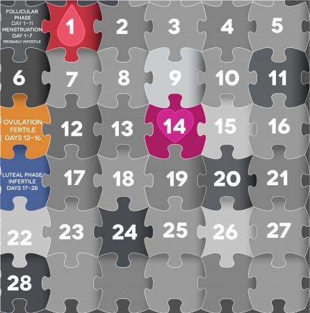 sistema reproductor femenino: Ciclo menstrual menstrual Avarage calendario. Fase folicular, la ovulación, la fase lútea, período de sangrado.