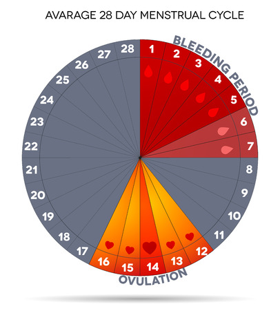 wheel: Menstrual cycle graphic. Avarage menstrual cycle days. Bleeding period and ovulation. Illustration