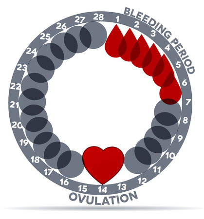 Menstrual cycle graphic. Avarage menstrual cycle days. Bleeding period and ovulation. Beautiful abstract design. Bleeding days- drop symbol; ovulation- heart. Vector