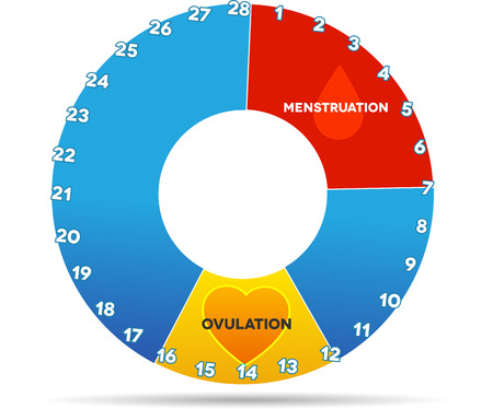 period: Menstrual cycle graphic. Avarage menstrual cycle days. Bleeding period (red color) and ovulation (yellow). Isolated on white.