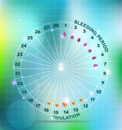 infertility: Menstrual cycle wheel  Average menstrual cycle  Bleeding period and ovulation
