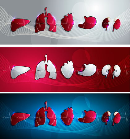 Human organs- heart, liver, kidneys, stomcah and lungs. Banner set, three colors red blue and light grey.
