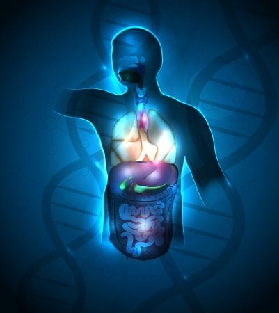 인간의 해부학 추상적 인 디자인, 배경에서 DNA 사슬. 아름다운 깊고 푸른 색상과 반짝이는 조명.