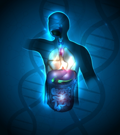 sistema digestivo humano: Dise�o abstracto anatom�a humana, la cadena de ADN en el fondo. Color azul profundo hermoso y luces brillantes.