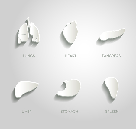 Human organs illustrations set, abstract paper design.  Vector