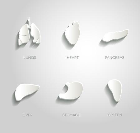 liver organ: Human organs illustrations set, abstract paper design.