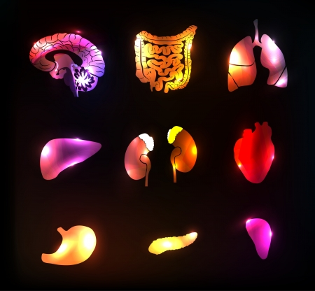 anatomia humana: Coloridas y brillantes dise�os abstractos anatom�a humana.