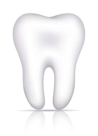 oral hygiene: Healthy white tooth illustration, isolated on white  Illustration