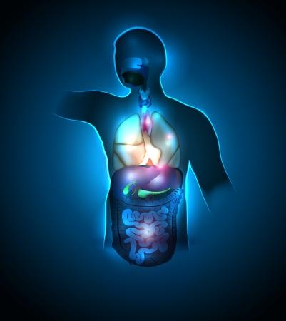 trzustka: Anatomia człowieka kolorowe i jasne projekt Piękny granatowy kolor