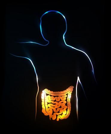 intestines: Colon y los intestinos ilustraci�n m�dica abstracto, fondo