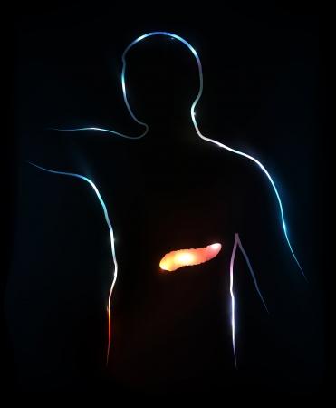 pancreas: Ilustraci�n m�dica P�ncreas abstracto, fondo Vectores