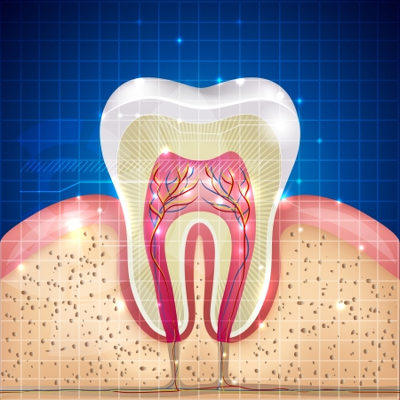 whiten: Beautiful tooth cross section illustration, deep blue background and sparkling lights around