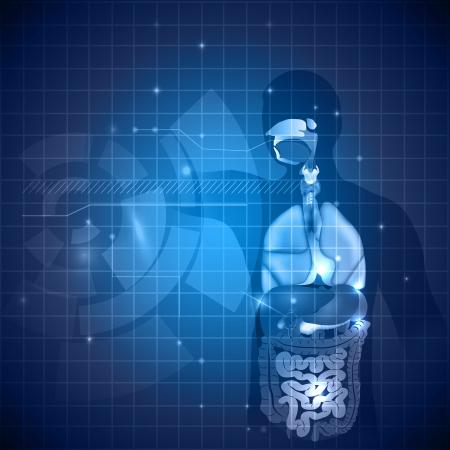 organos internos: Fondo la anatomía humana, varios órganos internos, de color azul profundo y ligeros matices.