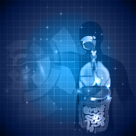 Human anatomy background, various internal organs, deep blue color and light shades. Zdjęcie Seryjne - 24553360