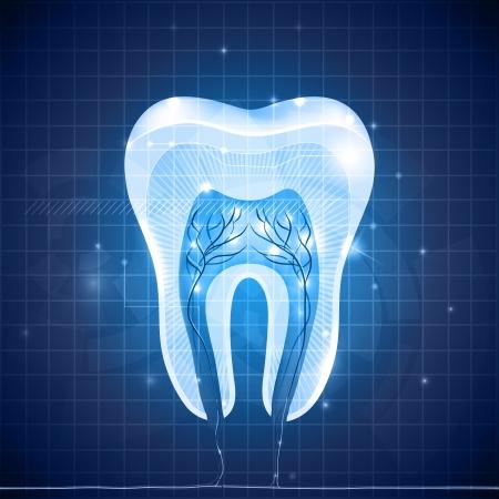 diente caricatura: Secci�n transversal del diente blanco sano, anatom�a detallada. Dise�o dental azul abstracto.